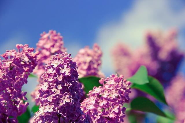pensee positive-fleurs